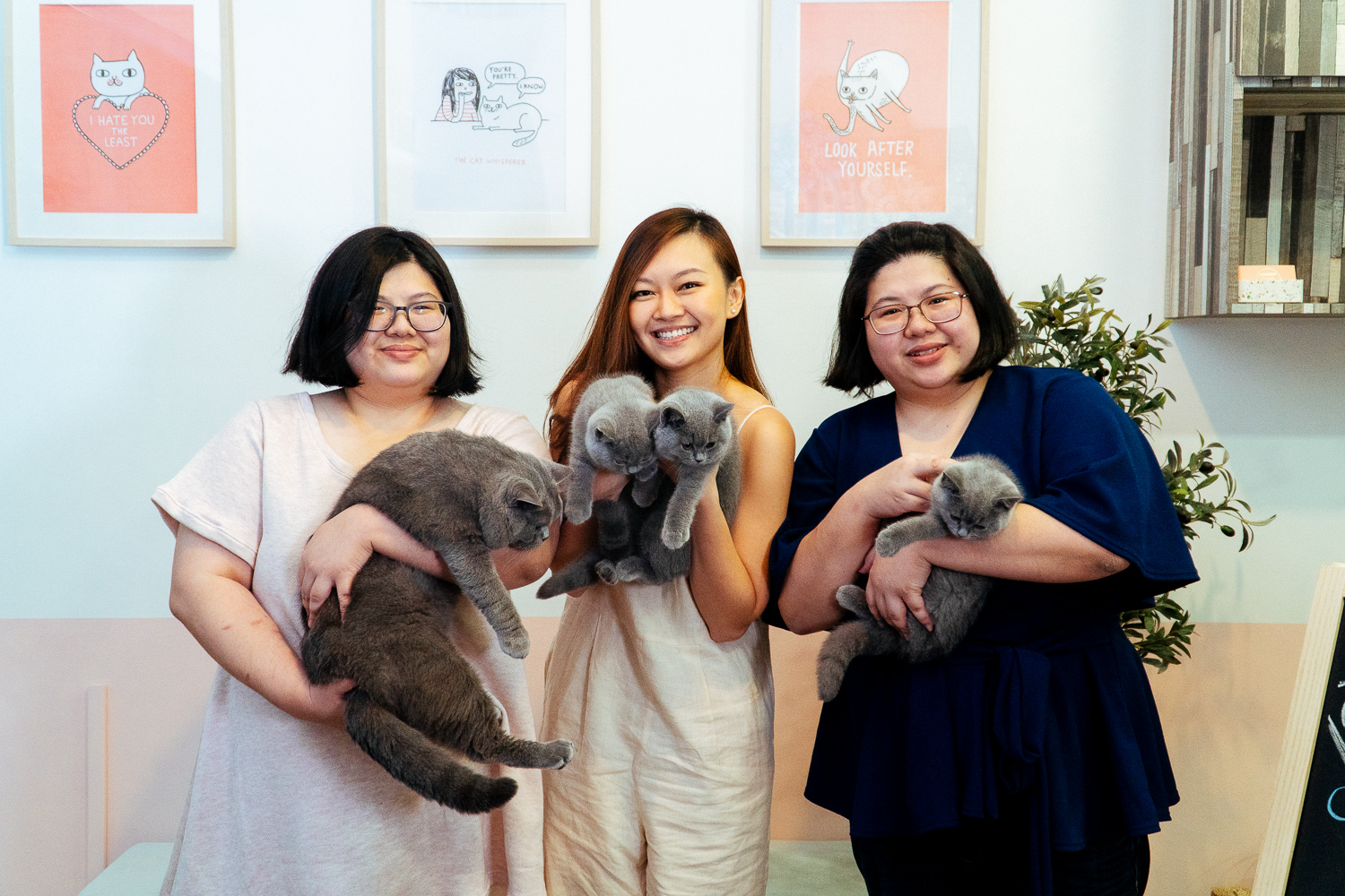 Career Feature: A Ball Of A Time With ChubbyBuddy Cats!