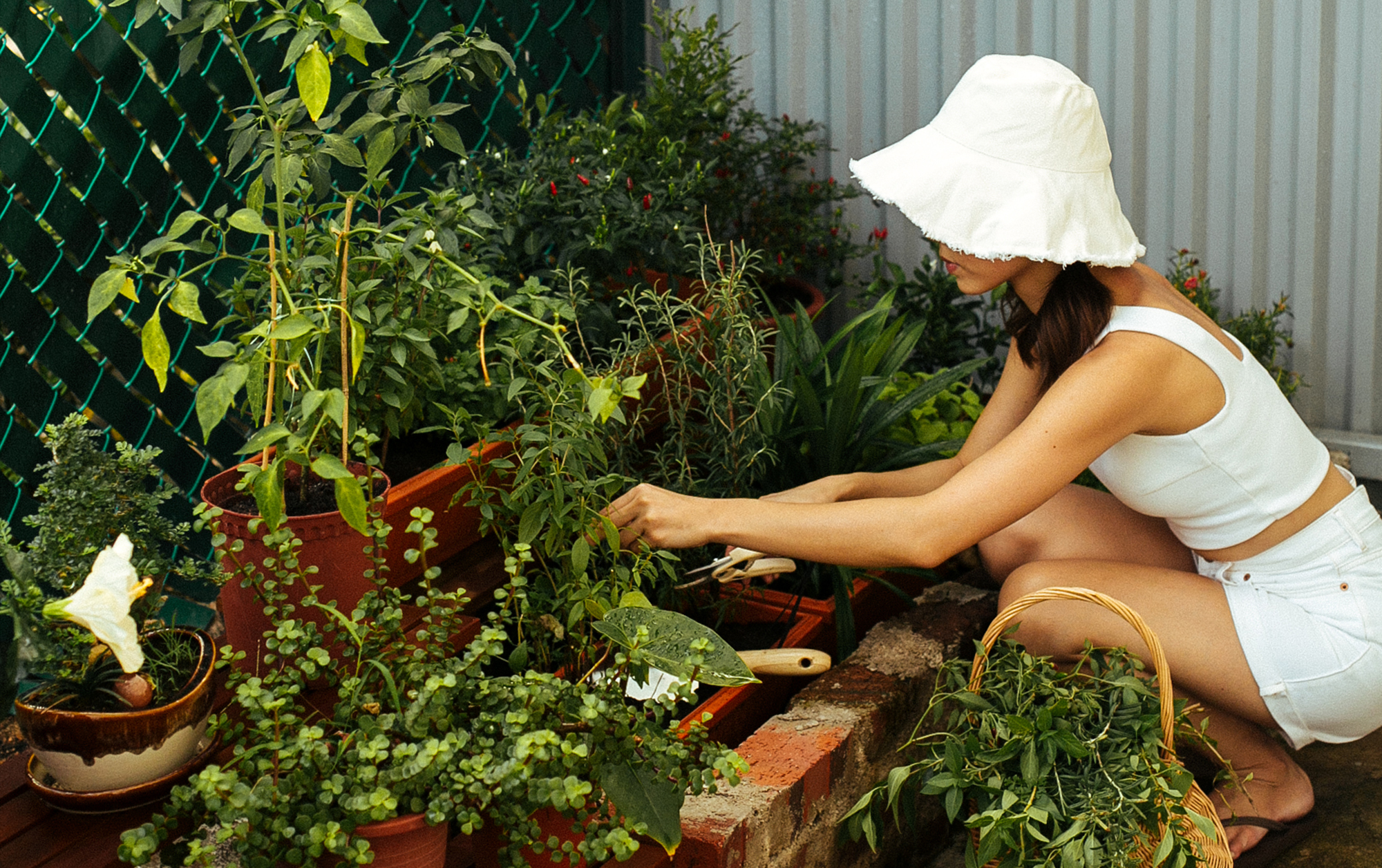 Andrea's Herb Garden – What To Grow For Singapore's Weather